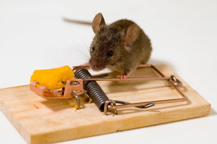 Мышеловка для мышей