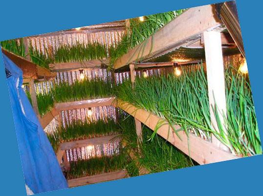 Стеллажи для выращивания лука в гараже