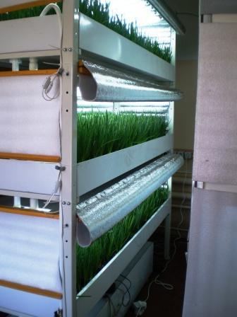 Устройство для выращивания лука гидропоникой