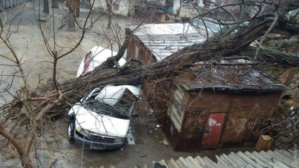 Упало дерево на гараж