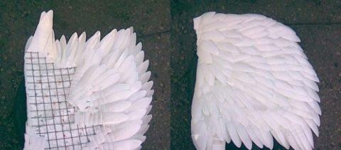 Формирование крыльев