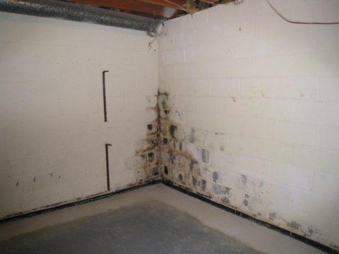Пораженный плесенью участок в гараже
